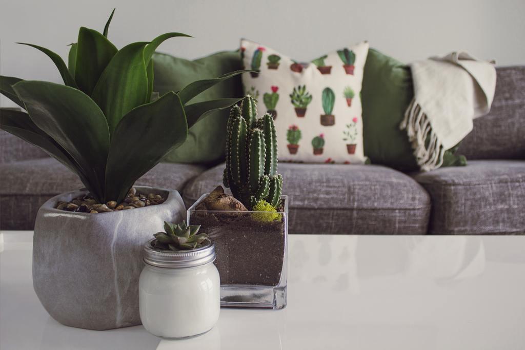 4 plante recomandate a fi tinute in casa